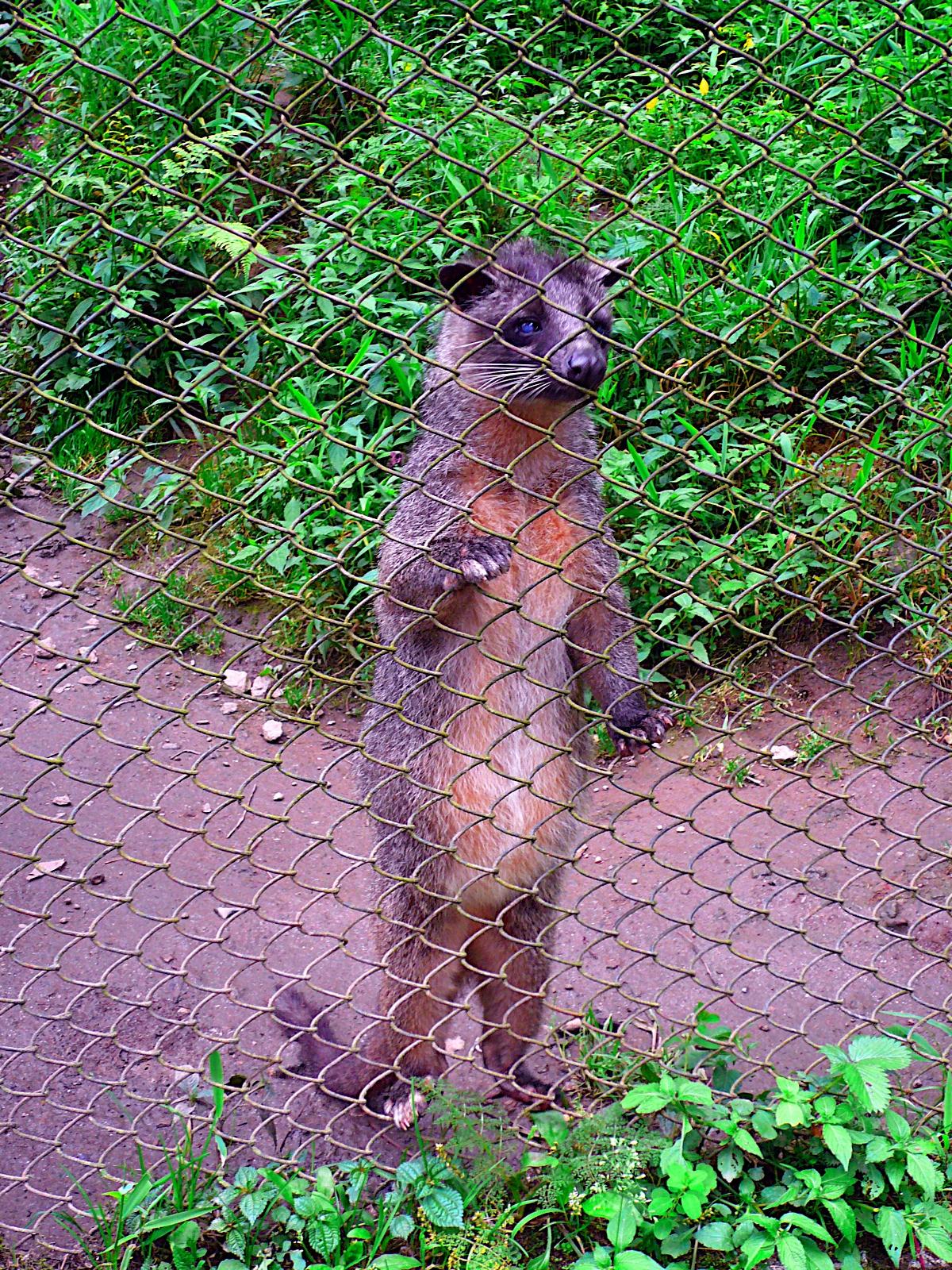 SIKKIM TRIP 2008: 17 May 2008. Himalayan Zoo, Gangtok