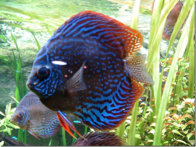 paris aquarium 102210 0001