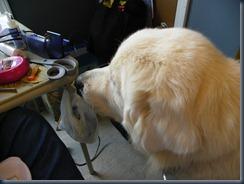 7 14 10 sewing rm dr mjr drss 029