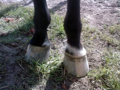 Vos expérimentations pieds nus SP_A0601