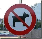 perro atropellado