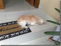 comportamiento_canino