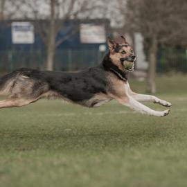 yahoo by Michael  M Sweeney - Animals - Dogs Running ( michael m sweeney, run, dog )