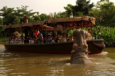 jungle_cruise_hippos