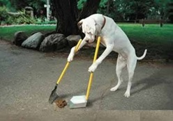 Truques para cachorro