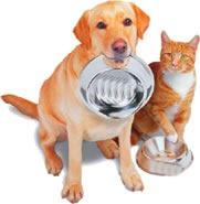 cachorro e gato (2)