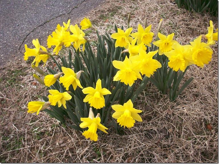 Springtime 008