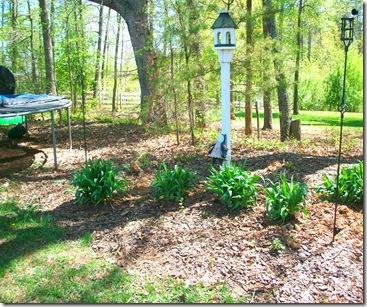 Spring Garden 038