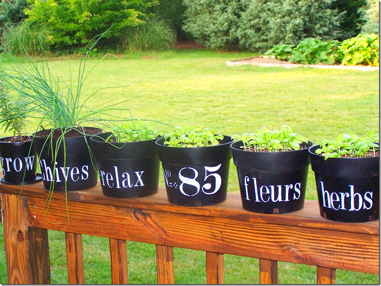 Flower Pots with Chives 011