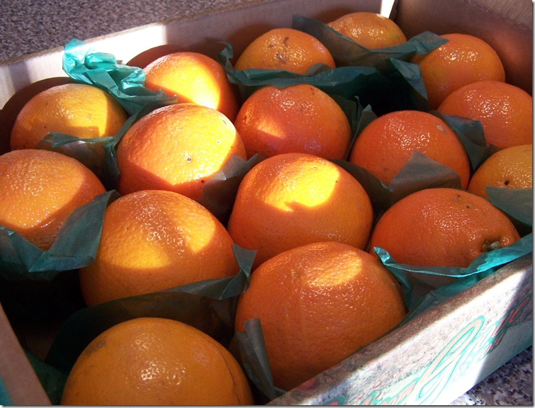 Honey Bell Oranges 003