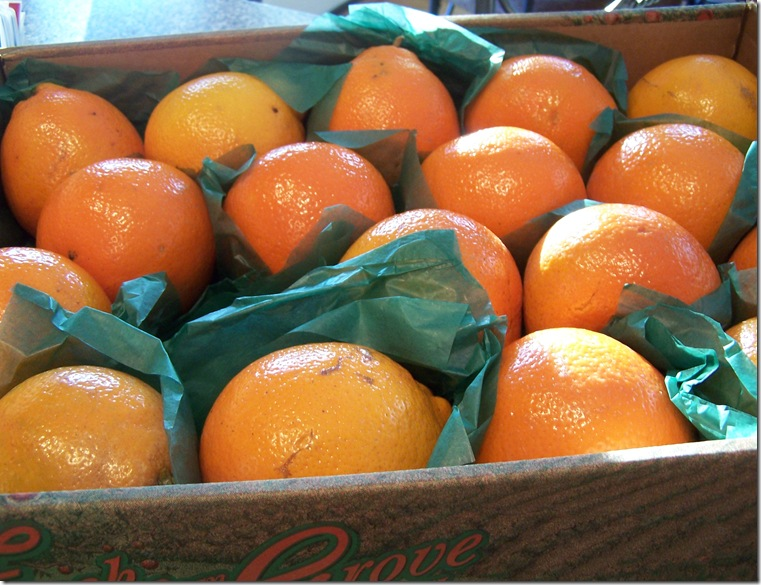 Honey Bell Oranges 005