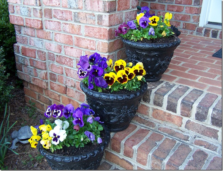Lemon Poppy Seed Cupcakes and Pansies 012