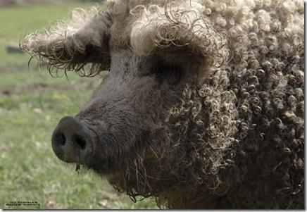 babi 4