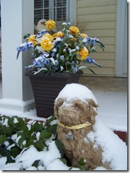 doginsnowfrntporch121610