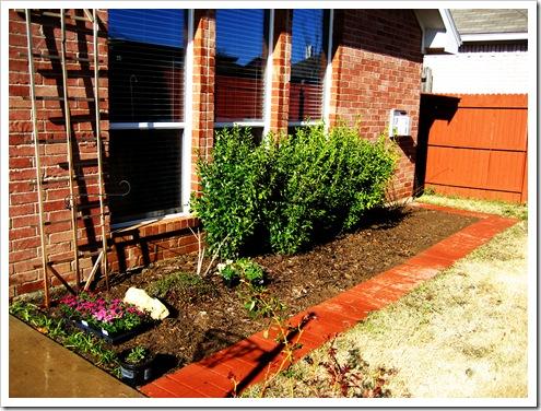 gardening 2010 116