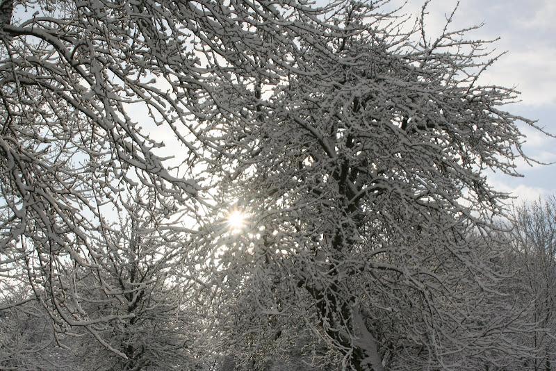 Le  calvados sous la neige... les chevaux s'éclatent! IMG_5536