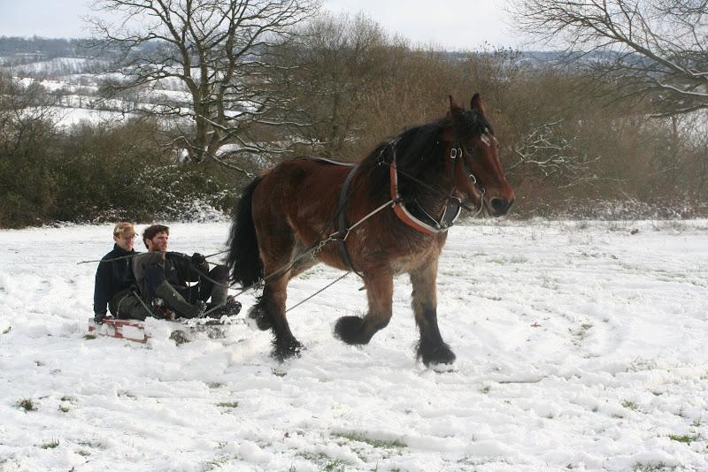 Le  calvados sous la neige... les chevaux s'éclatent! IMG_5295