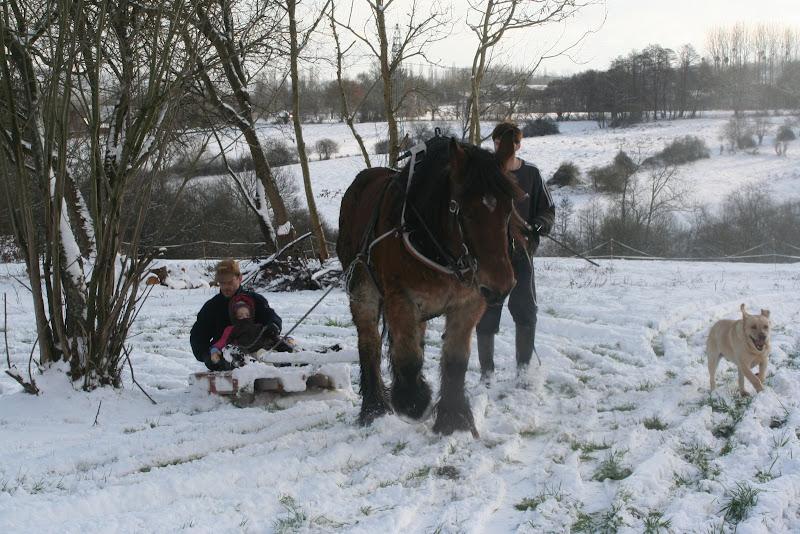 Le  calvados sous la neige... les chevaux s'éclatent! IMG_5276
