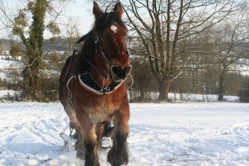 Le  calvados sous la neige... les chevaux s'éclatent! IMG_5221