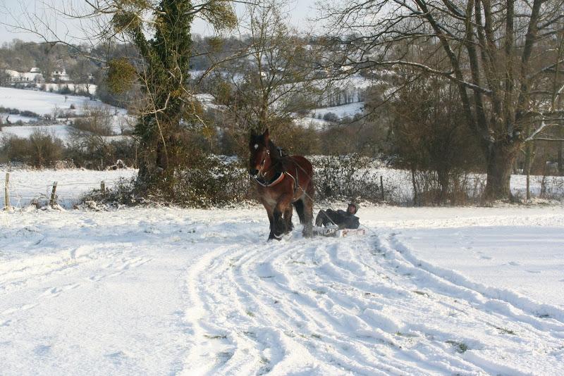 Le  calvados sous la neige... les chevaux s'éclatent! IMG_5212