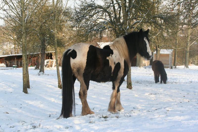 Le  calvados sous la neige... les chevaux s'éclatent! IMG_5180