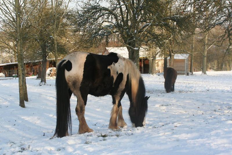 Le  calvados sous la neige... les chevaux s'éclatent! IMG_5177