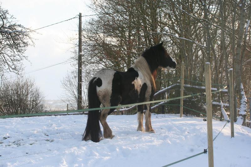 Le  calvados sous la neige... les chevaux s'éclatent! IMG_5175