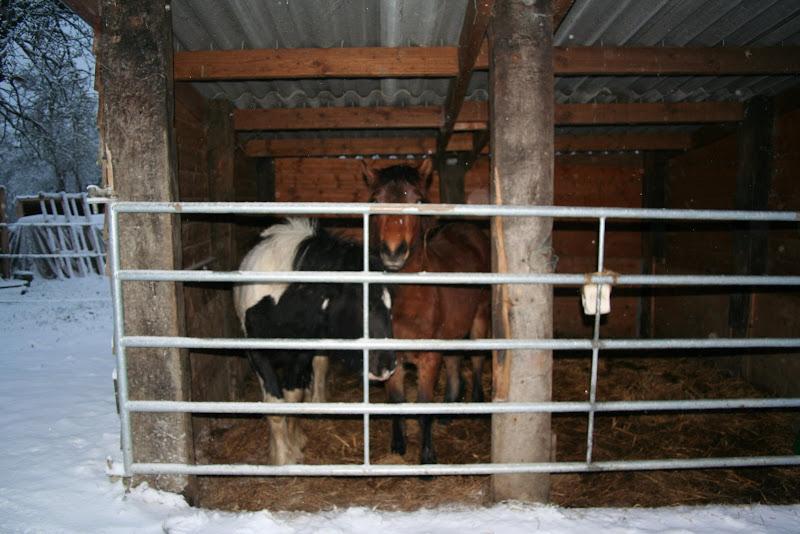 Le  calvados sous la neige... les chevaux s'éclatent! IMG_5058