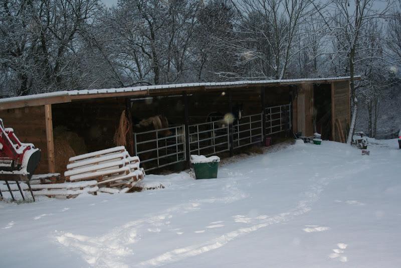 Le  calvados sous la neige... les chevaux s'éclatent! IMG_5054