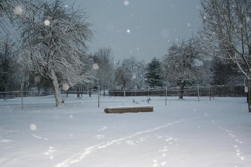 Le  calvados sous la neige... les chevaux s'éclatent! IMG_5044