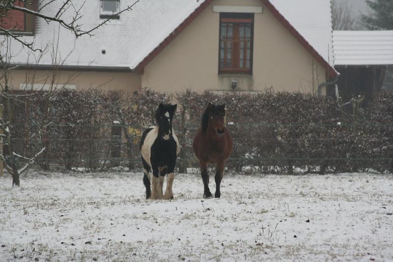 Le  calvados sous la neige... les chevaux s'éclatent! IMG_4996