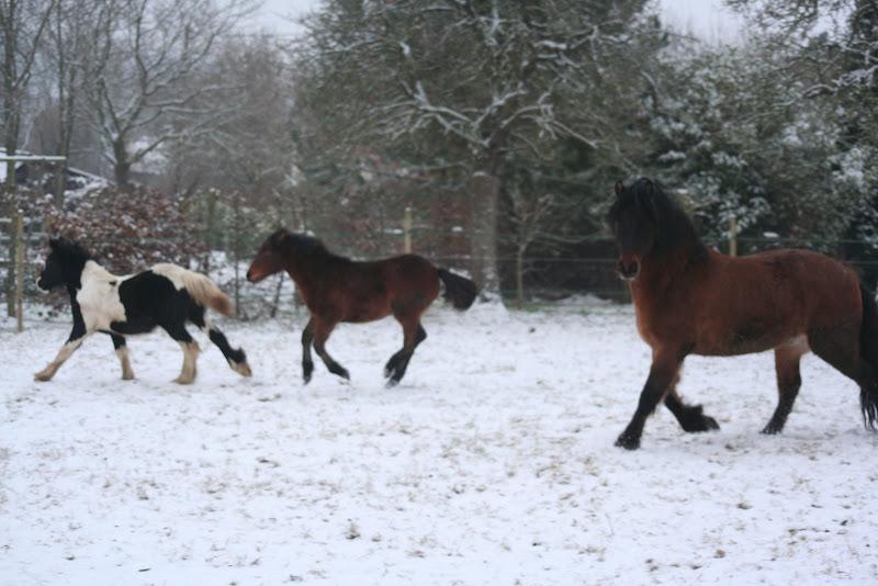 Le  calvados sous la neige... les chevaux s'éclatent! IMG_4961