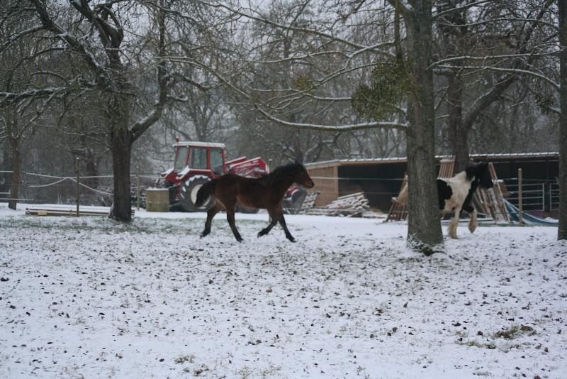 Le  calvados sous la neige... les chevaux s'éclatent! IMG_4968