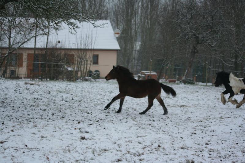 Le  calvados sous la neige... les chevaux s'éclatent! IMG_4964