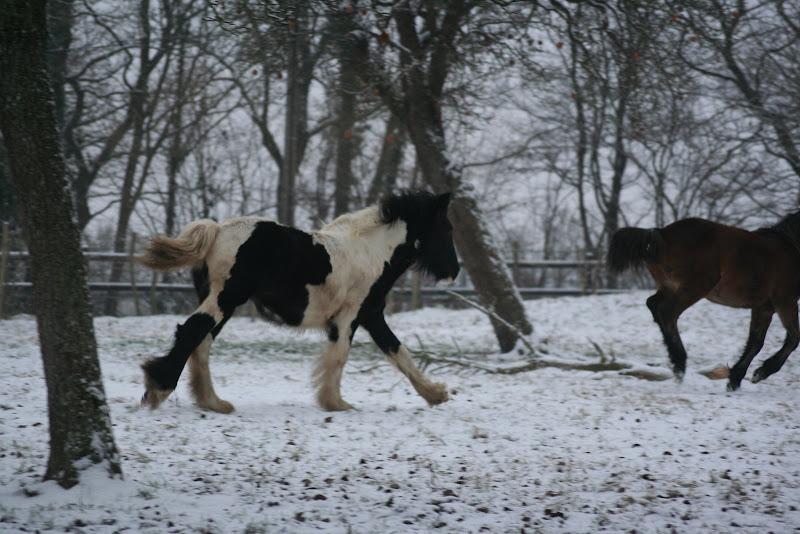 Le  calvados sous la neige... les chevaux s'éclatent! IMG_4946