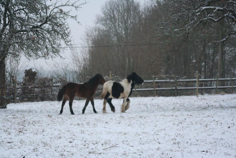 Le  calvados sous la neige... les chevaux s'éclatent! IMG_4956