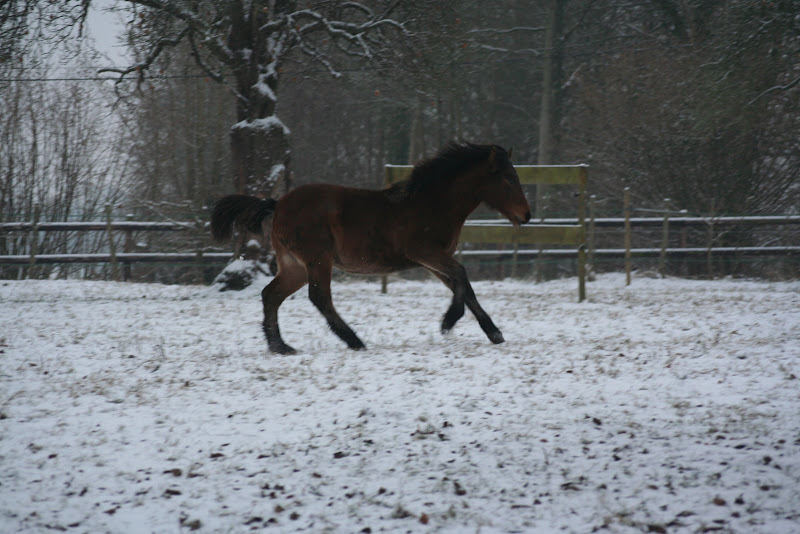 Le  calvados sous la neige... les chevaux s'éclatent! IMG_4942