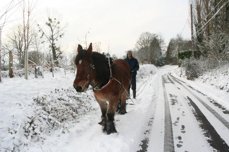 Le  calvados sous la neige... les chevaux s'éclatent! IMG_5119