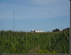 Carp corn
