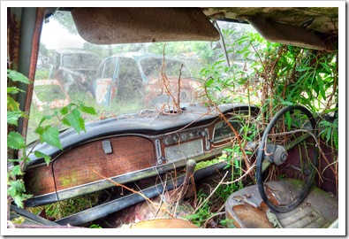 interior of old car being reclaimed by nature