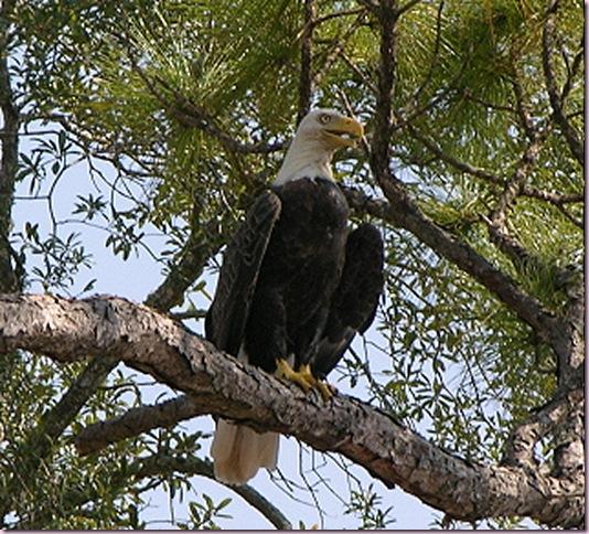 Eagle1417