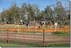 Joan's-Pumpkin-Patch-021
