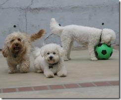 dogsball