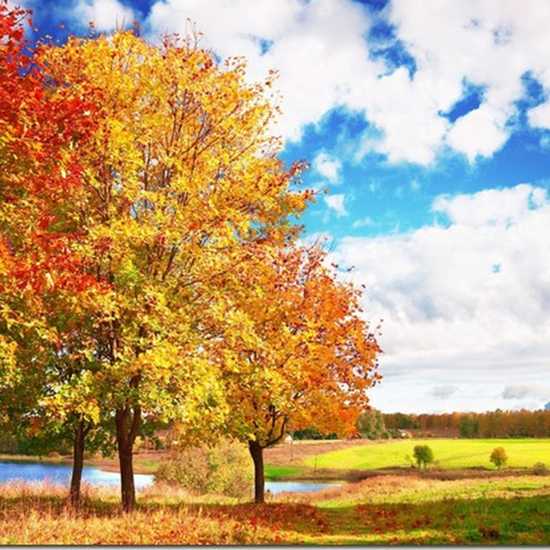 Sunshine autumn landscape desktop wallpaper