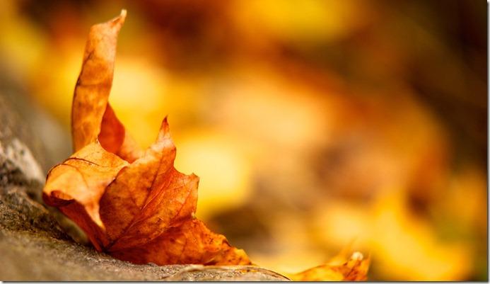 Leaf_1366x768