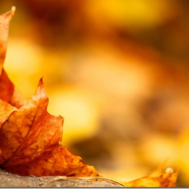 Leaf / autumn wallpaper