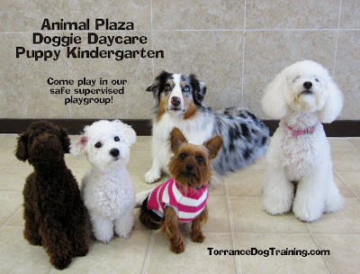 Small Dog Doggie Daycare
