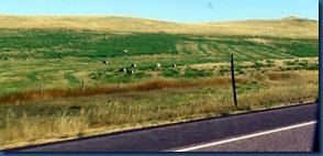 Wyoming2010 (3)