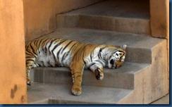 Albq Zoo (17)