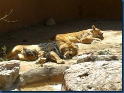Albq Zoo (20)